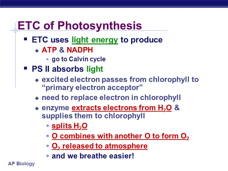 AP Biology Photosystems of photosynthesis  2 photosystems in thylakoid membrane  collections of chlorophyll molecules  act as light-gathering molec