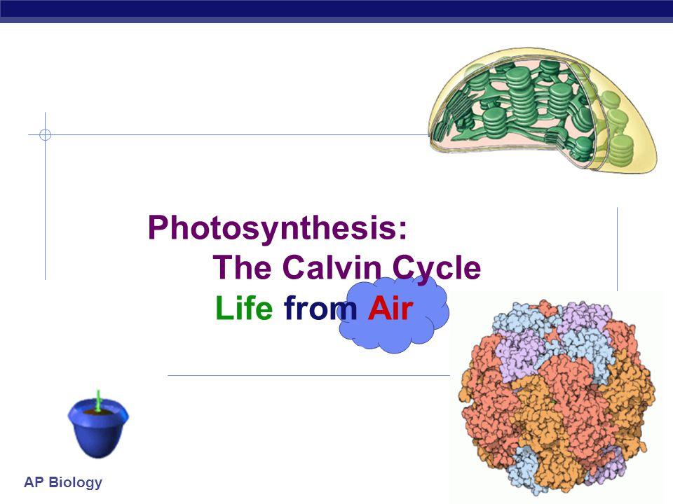 AP Biology Photophosphorylation NONcyclic photophosphorylation cyclic photophosphorylation ATP NADP