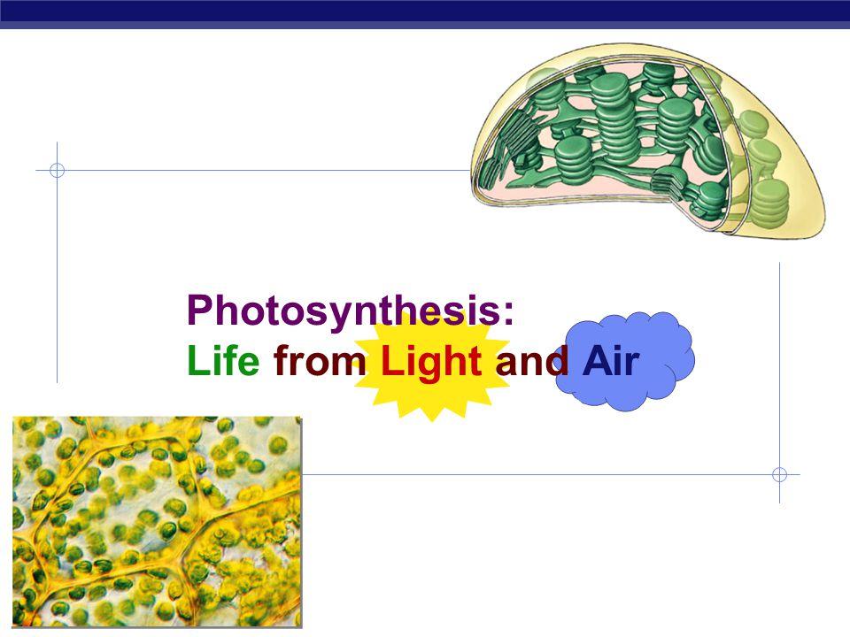 AP Biology 2007-2008