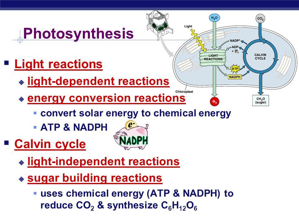 AP Biology Photosynthesis