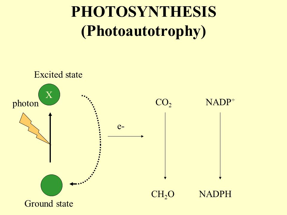 PHOTOAUTOTROPHY: 2 reactions 1. LIGHT  CHEMICAL ENERGY (ATP) 2. CO 2 reduction →Organic compounds