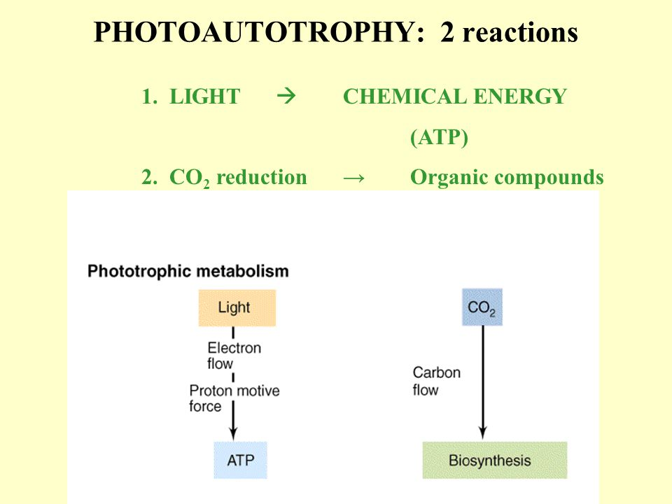 Phototrophic Prokaryotes: the metabolic menu GroupReducing powerOxidized product Purple nonsulfur bacteriaH 2, reduced organicOxidized organics Purple sulfur bacteriaH 2 SSO 4 -2 Green sulfur bacteriaH 2 SSO 4 -2 Green non sulfur bacteria*H 2 SSO 4 -2 Heliobacteria**Lactate, organicsOxidized organics CyanobacteriaH 2 OO 2 Prochlorophytes***H 2 OO 2 *Most ancient.