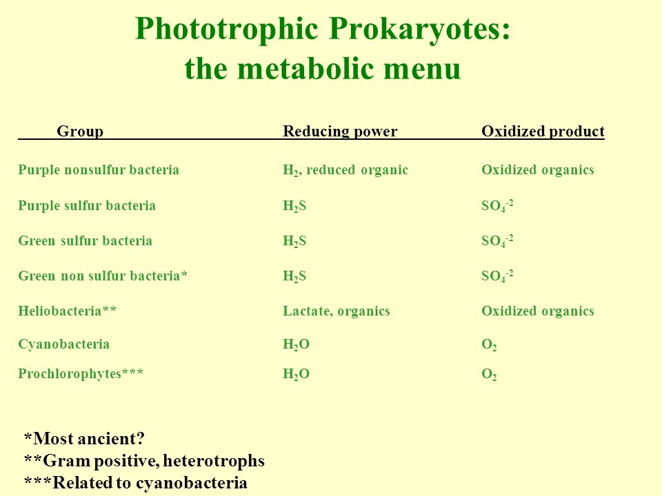 Photosynthetic Membranes Reaction center chlorophyll -few -convert light energy to ATP Light harvesting chlorophyll -many - antenna -captures faint signal of low light environments Accessory pigments Carotenoids Phycobilins