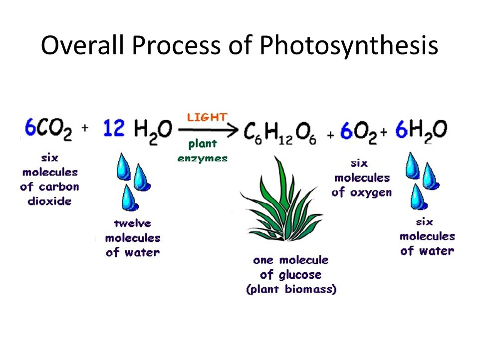 Overall Process of Photosynthesis