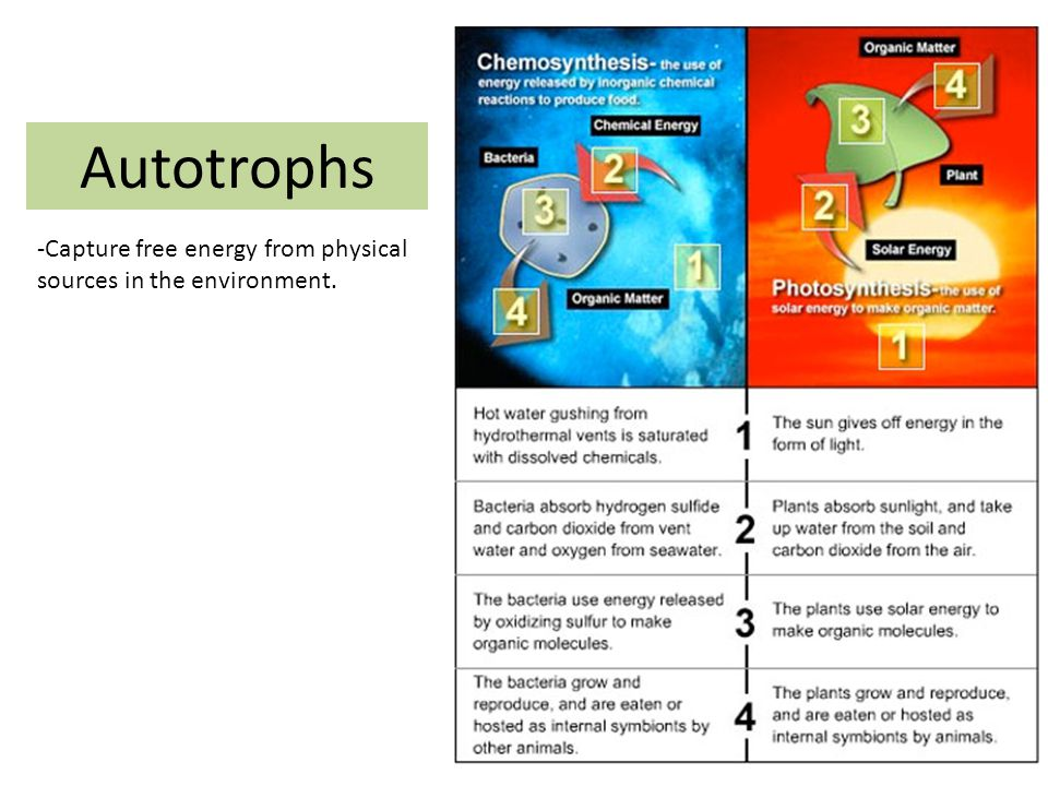 Photosynthesis Plants & other photosynthetic organisms produce foods that begin food chains.