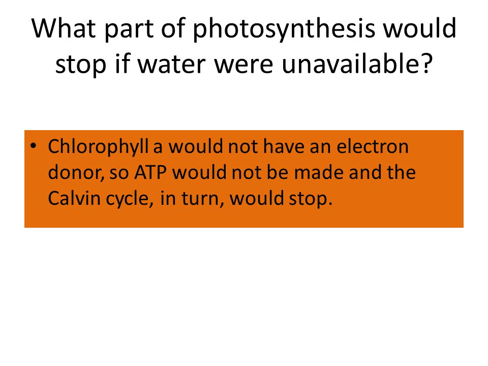 What part of photosynthesis would stop if water were unavailable.