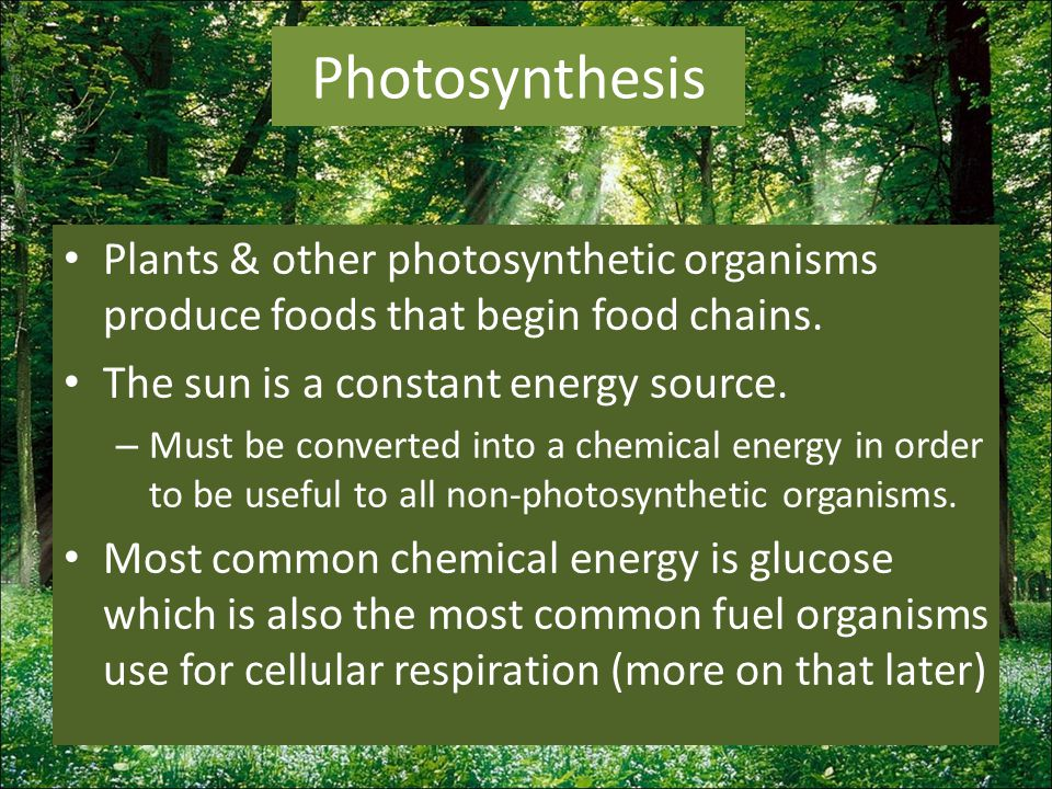 Modern-day plants have 2 photosystems Photosystem I – Most efficient at absorbing wavelengths at 700nm Photosystem II – Most efficient at absorbing wavelengths at 680nm These 2 photosytems work together to bring about a non-cyclic electron transfer.
