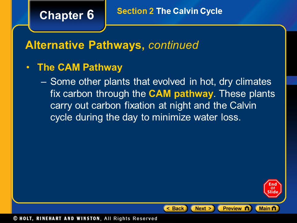 Chapter 6 Alternative Pathways, continued The CAM Pathway –Some other plants that evolved in hot, dry climates fix carbon through the CAM pathway.