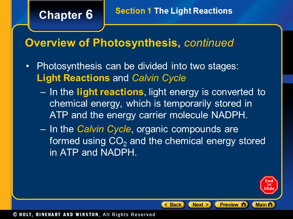 Section 1 The Light Reactions Chapter 6 Overview of Photosynthesis, continued Photosynthesis can be divided into two stages: Light Reactions and Calvin Cycle –In the light reactions, light energy is converted to chemical energy, which is temporarily stored in ATP and the energy carrier molecule NADPH.