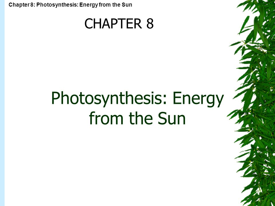 Chapter 8: Photosynthesis: Energy from the Sun Photosynthesis: Energy from the Sun CHAPTER 8