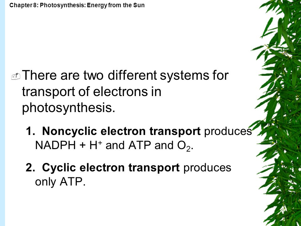Chapter 8: Photosynthesis: Energy from the Sun  There are two different systems for transport of electrons in photosynthesis.