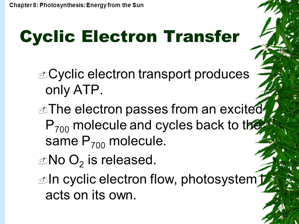 Chapter 8: Photosynthesis: Energy from the Sun  Cyclic electron transport produces only ATP.