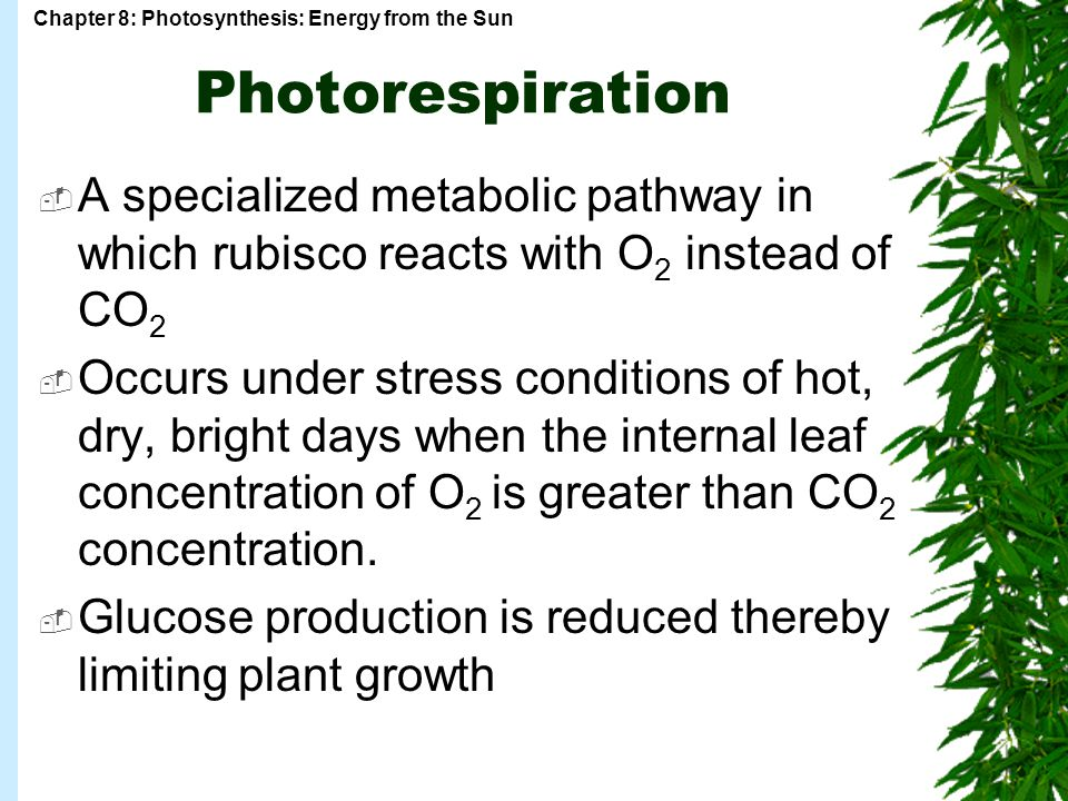 Chapter 8: Photosynthesis: Energy from the Sun Photorespiration  A specialized metabolic pathway in which rubisco reacts with O 2 instead of CO 2  Occurs under stress conditions of hot, dry, bright days when the internal leaf concentration of O 2 is greater than CO 2 concentration.