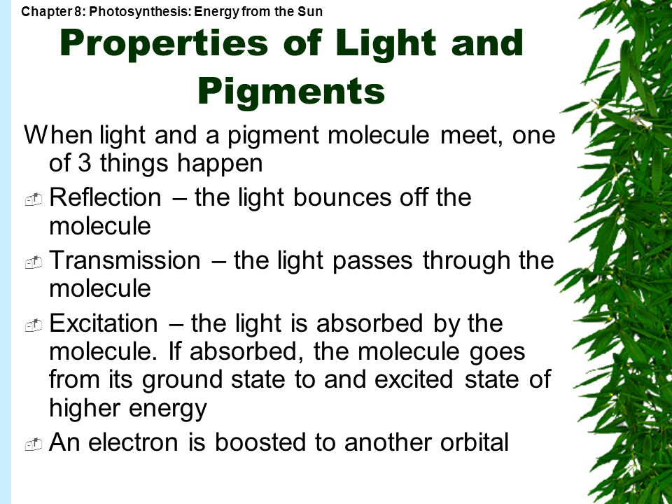 Chapter 8: Photosynthesis: Energy from the Sun Properties of Light and Pigments When light and a pigment molecule meet, one of 3 things happen  Reflection – the light bounces off the molecule  Transmission – the light passes through the molecule  Excitation – the light is absorbed by the molecule.