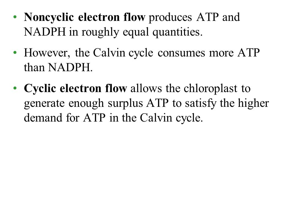 Noncyclic electron flow produces ATP and NADPH in roughly equal quantities.