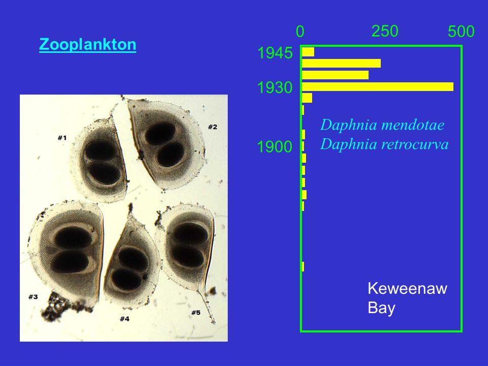 Zooplankton 0 250 500 Keweenaw Bay Daphnia mendotae Daphnia retrocurva 1945 1930 1900
