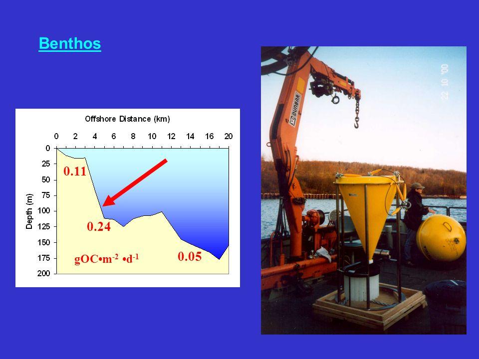 Benthos 0.11 0.24 0.05 gOCm -2 d -1