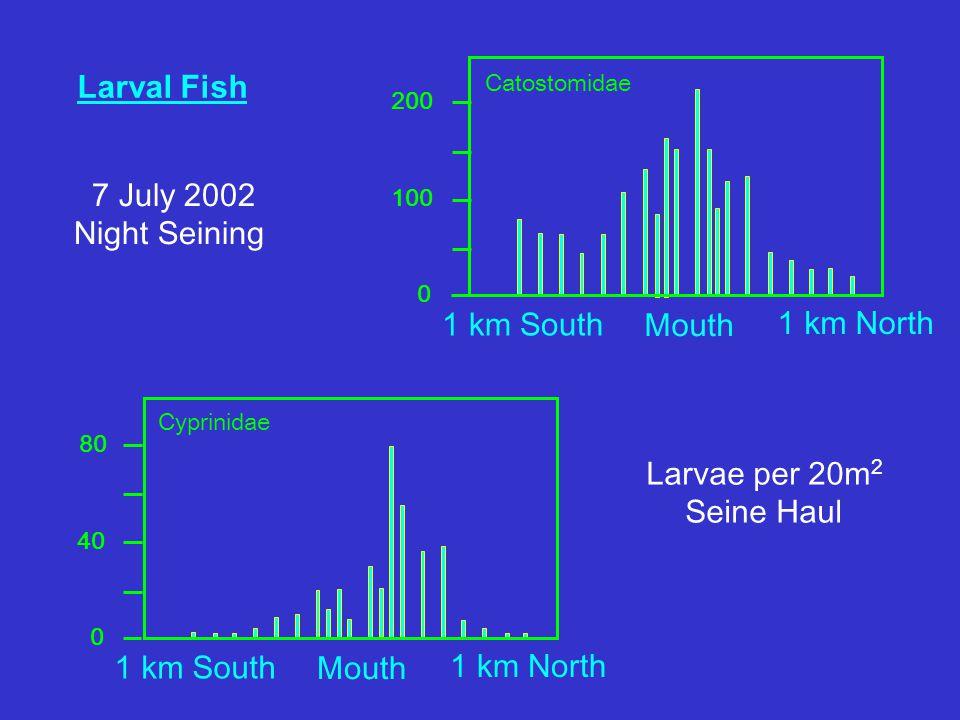 Larval Fish Mouth 1 km North 1 km South Catostomidae Mouth 1 km North 1 km South Cyprinidae 7 July 2002 Night Seining Larvae per 20m 2 Seine Haul 200 100 0 80 40 0