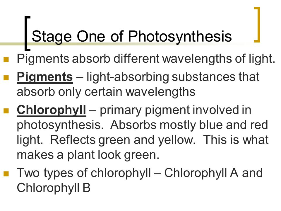 Stage One of Photosynthesis Pigments absorb different wavelengths of light. Pigments – light-absorbing substances that absorb only certain wavelengths