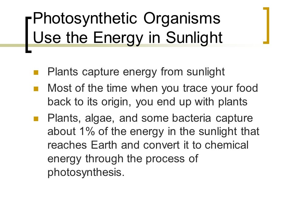 Stage One of Photosynthesis When light strikes thylakoid, energy is transferred to electrons in chlorophyll and other pigments.