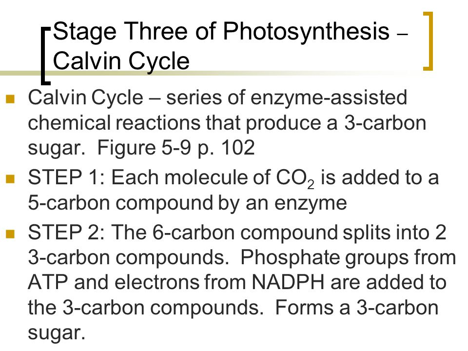 Stage Three of Photosynthesis – Calvin Cycle Calvin Cycle – series of enzyme-assisted chemical reactions that produce a 3-carbon sugar. Figure 5-9 p.