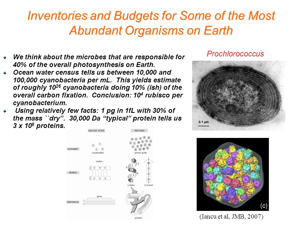 Inventories and Budgets for Some of the Most Abundant Organisms on Earth We think about the microbes that are responsible for 40% of the overall photo