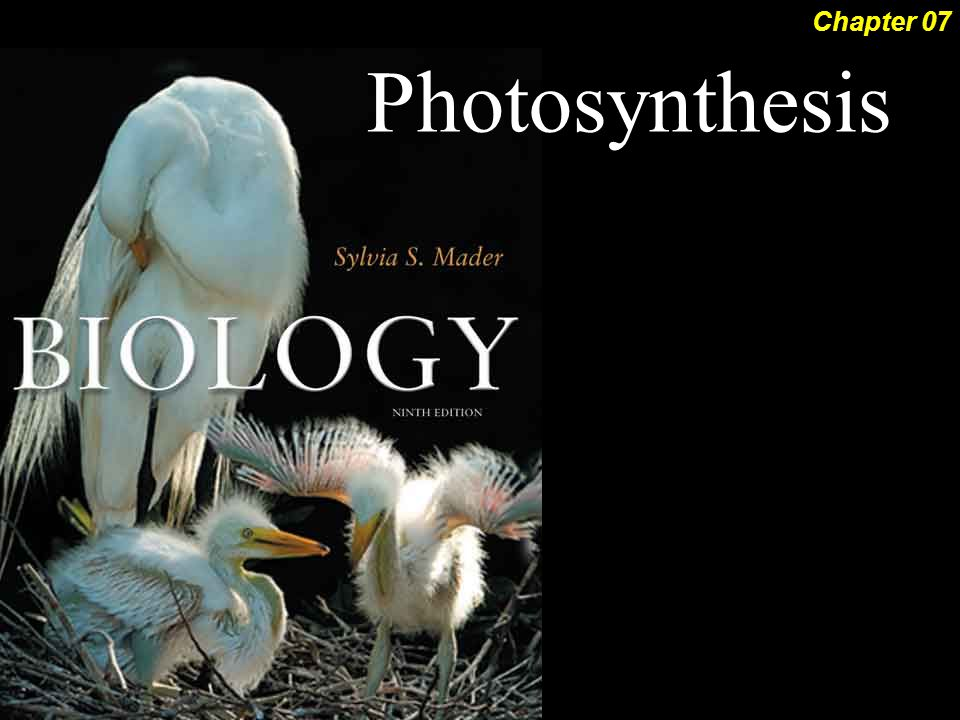 Photosynthesis Chapter 07