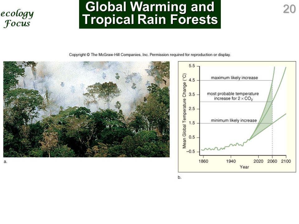 20 Global Warming and Tropical Rain Forests ecology Focus