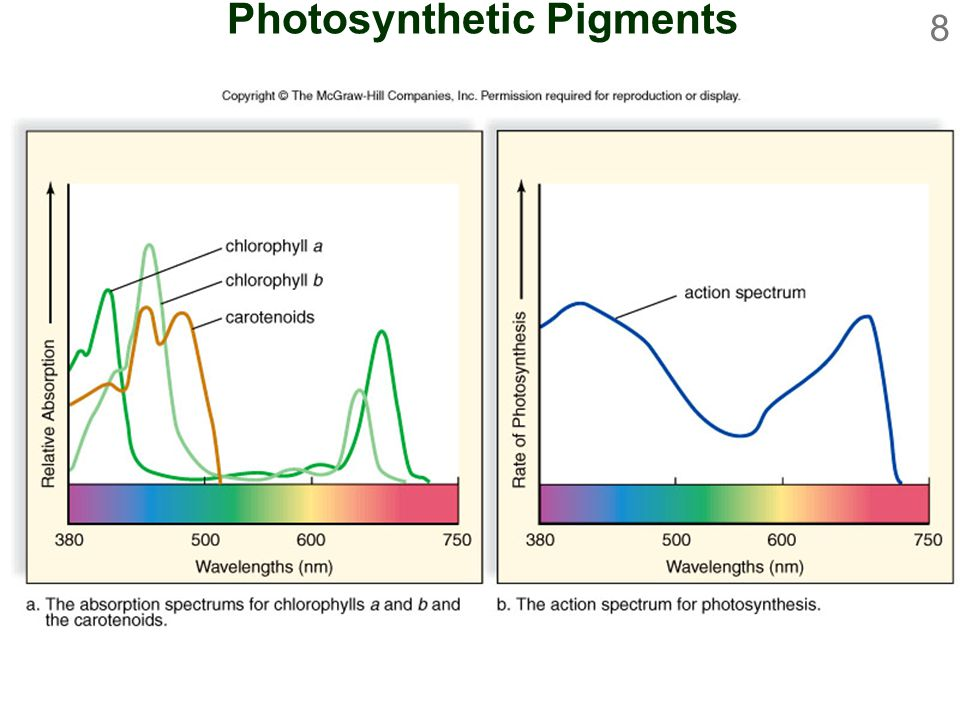 8 Photosynthetic Pigments