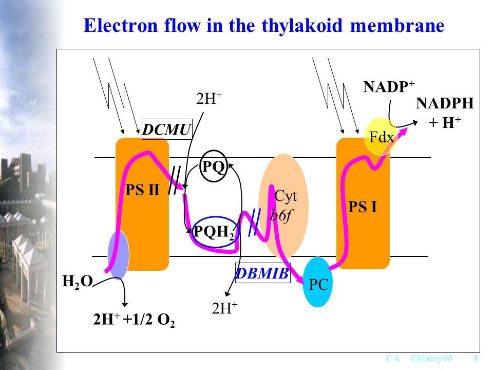 CA Chlamy068 H2OH2O PQ PS I PS II NADP + NADPH + H + PC 2H + 2H + +1/2 O 2 2H + Cyt b6f PQH 2 Fdx Electron flow in the thylakoid membrane DBMIB DCMU