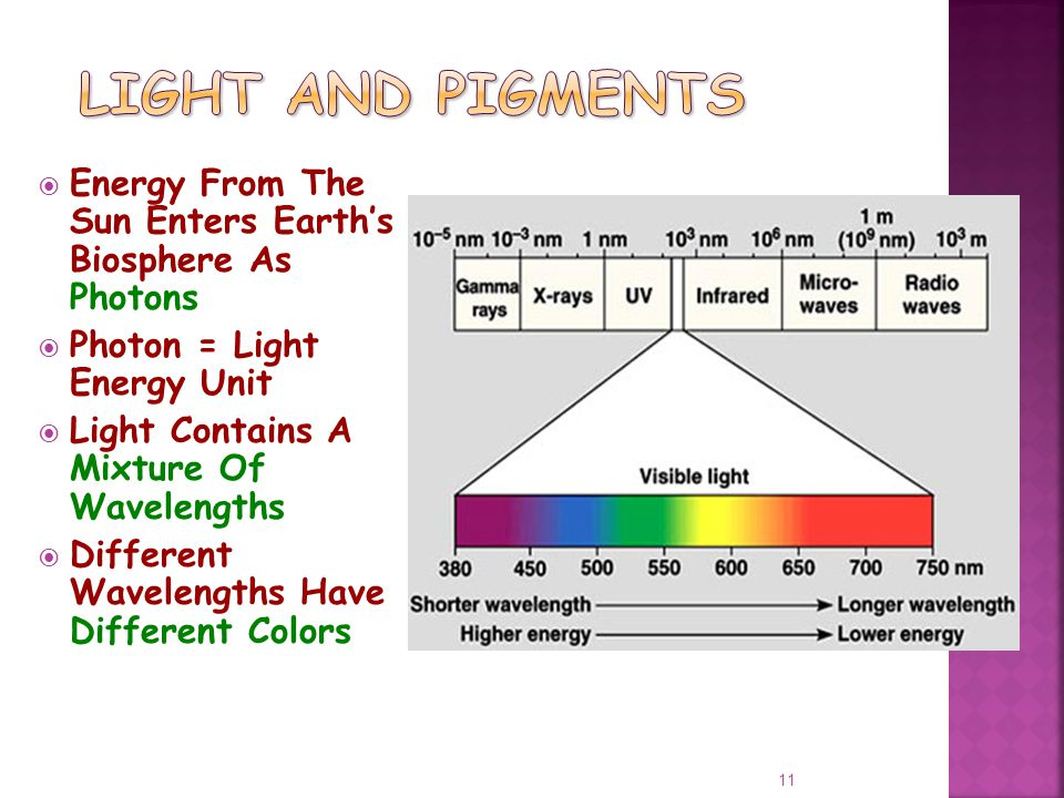  Energy From The Sun Enters Earth's Biosphere As Photons  Photon = Light Energy Unit  Light Contains A Mixture Of Wavelengths  Different Wavelengths Have Different Colors 11