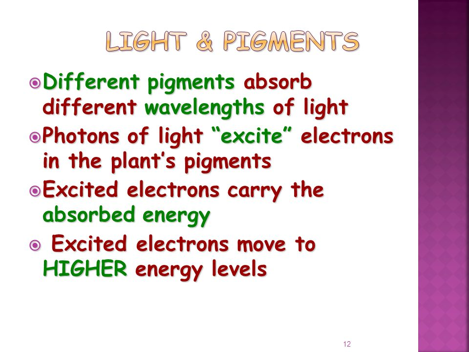  Different pigments absorb different wavelengths of light  Photons of light excite electrons in the plant's pigments  Excited electrons carry the absorbed energy  Excited electrons move to HIGHER energy levels 12