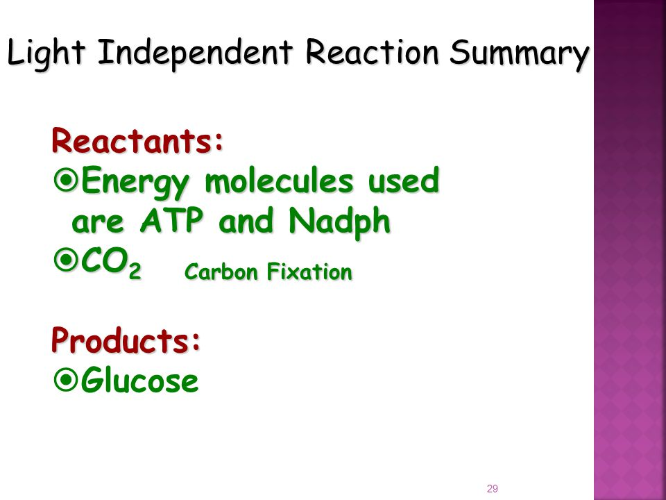 29 Light Independent Reaction Summary Reactants:  Energy molecules used are ATP and Nadph  CO 2Carbon Fixation Products:  Glucose