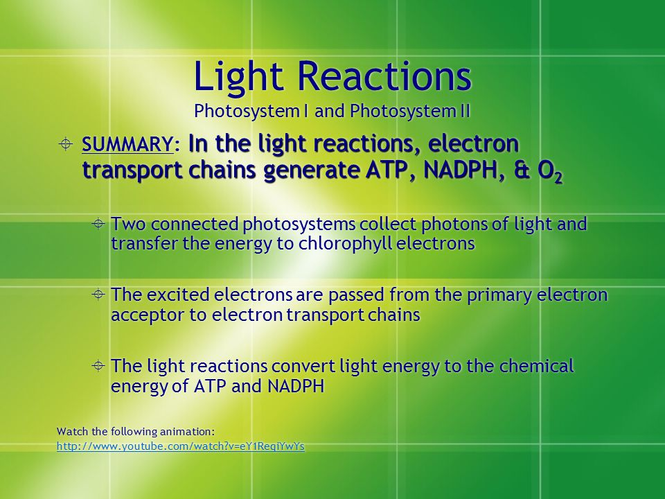 Light Reactions Photosystem I and Photosystem II In the light reactions, electron transport chains generate ATP, NADPH, & O 2  SUMMARY: In the light