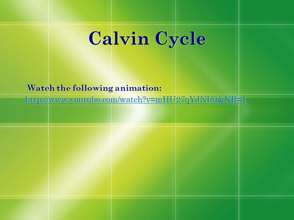 Calvin Cycle Watch the following animation: http://www.youtube.com/watch?v=mHU27qYJNU0&NR=1 Watch the following animation: http://www.youtube.com/watc