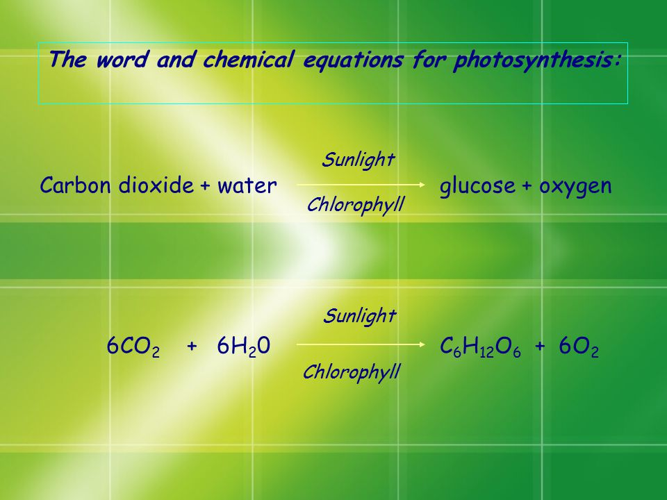 The word and chemical equations for photosynthesis: Carbon dioxide + water glucose + oxygen 6CO 2 + 6H 2 0C 6 H 12 O 6 + 6O 2 Sunlight Chlorophyll Sun