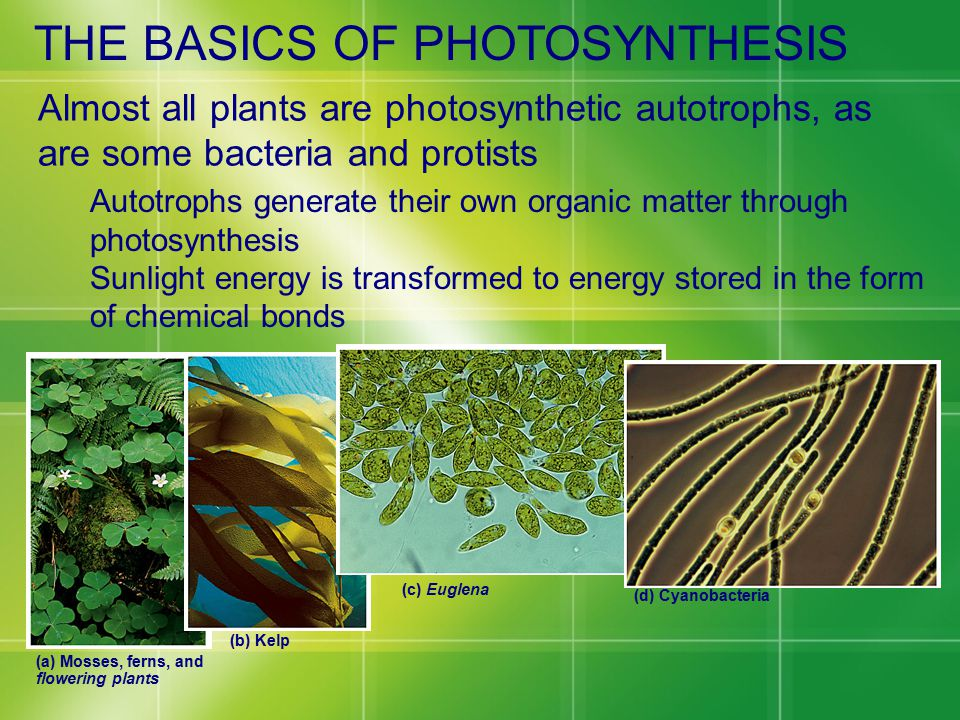 Almost all plants are photosynthetic autotrophs, as are some bacteria and protists Autotrophs generate their own organic matter through photosynthesis