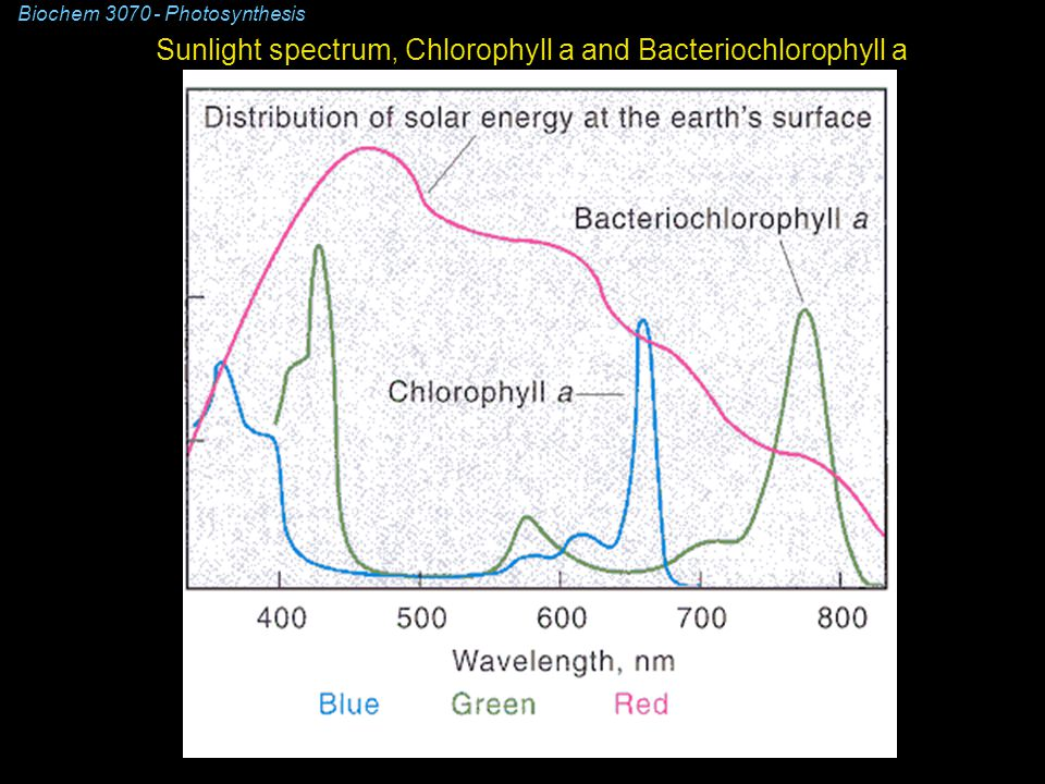 Sunlight spectrum, Chlorophyll a and Bacteriochlorophyll a