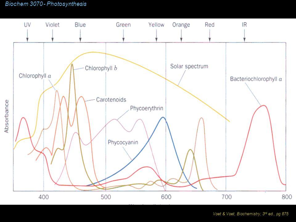 Biochem 3070 - Photosynthesis Voet & Voet, Biochemistry, 3 rd ed., pg 875