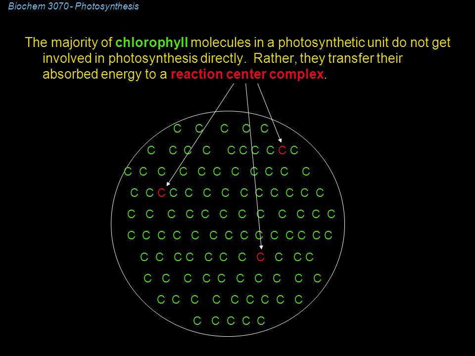 The majority of chlorophyll molecules in a photosynthetic unit do not get involved in photosynthesis directly.