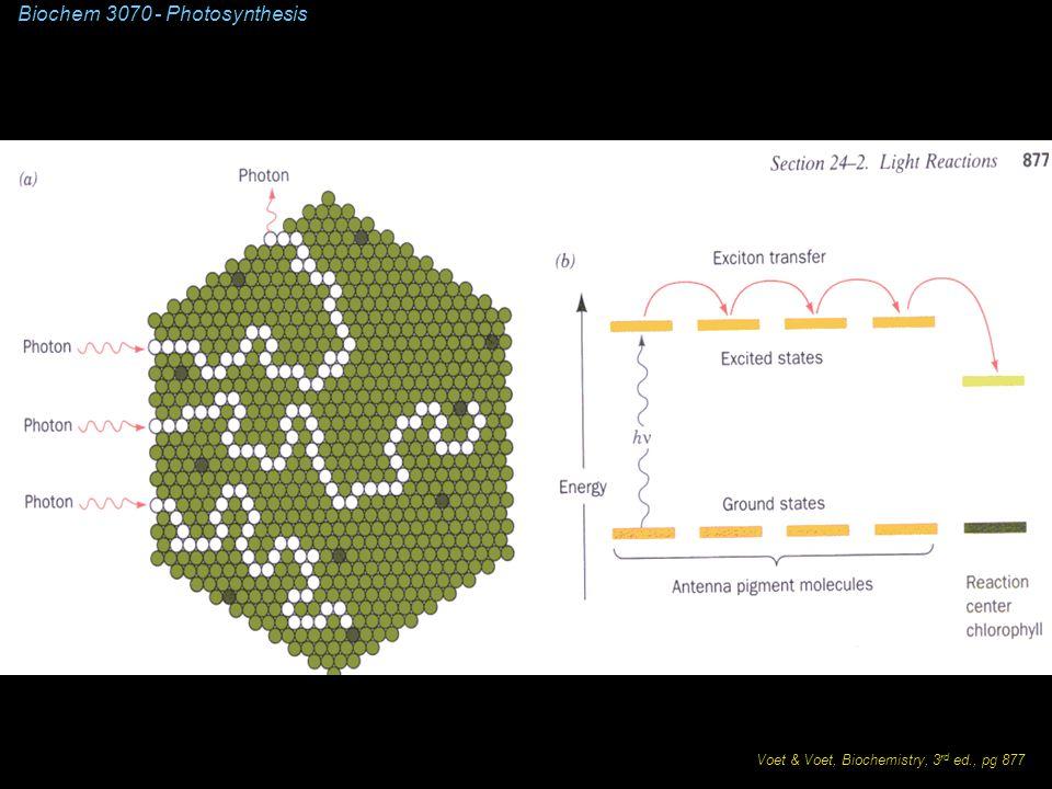 Biochem 3070 - Photosynthesis Voet & Voet, Biochemistry, 3 rd ed., pg 877