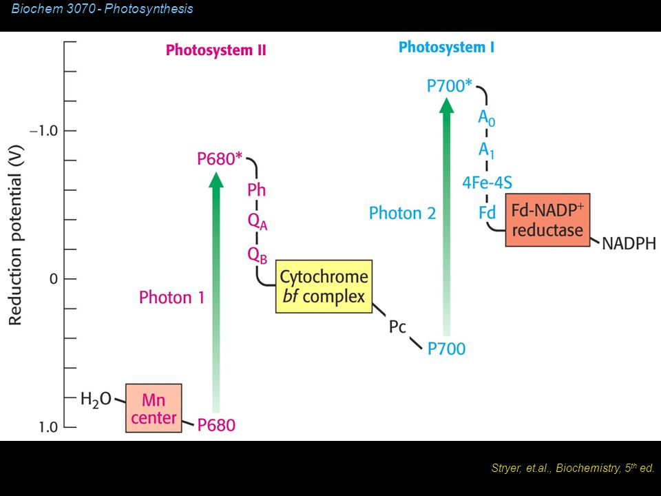 Biochem 3070 - Photosynthesis Stryer, et.al., Biochemistry, 5 th ed.