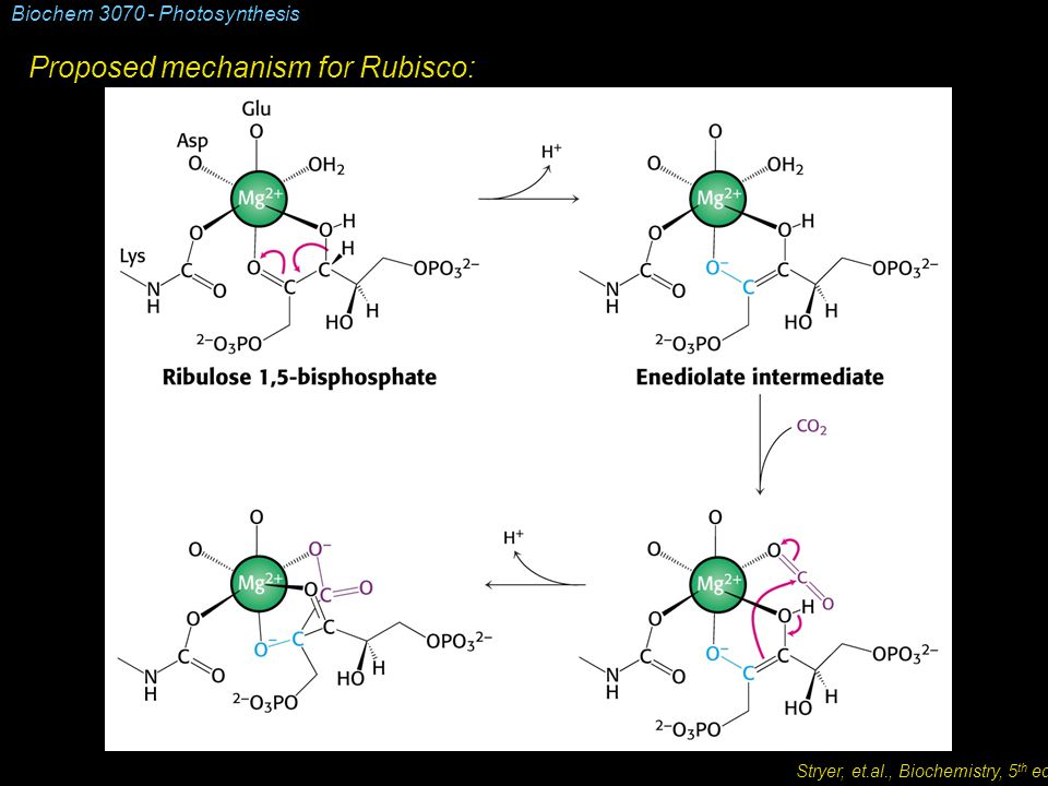 Biochem 3070 - Photosynthesis Proposed mechanism for Rubisco: Stryer, et.al., Biochemistry, 5 th ed.