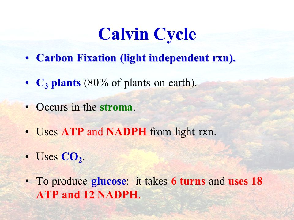 Calvin Cycle Carbon Fixation (light independent rxn).Carbon Fixation (light independent rxn).