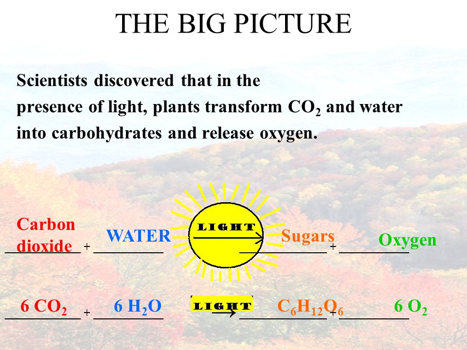 Factors that Affect Photosynthesis ____________________ Water is one of the raw materials needed, so A shortage of water can ________________ photosynthesis AMOUNT OF WATER Desert plants and conifers that live in dry conditions have a waxy coating on their leaves to prevent water loss.