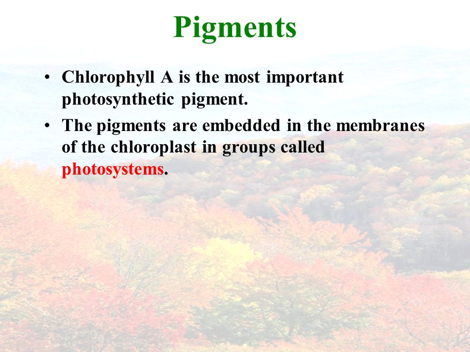 Photosynthesis is the process by which plants and few other organisms use to transform light energy into chemical energy.