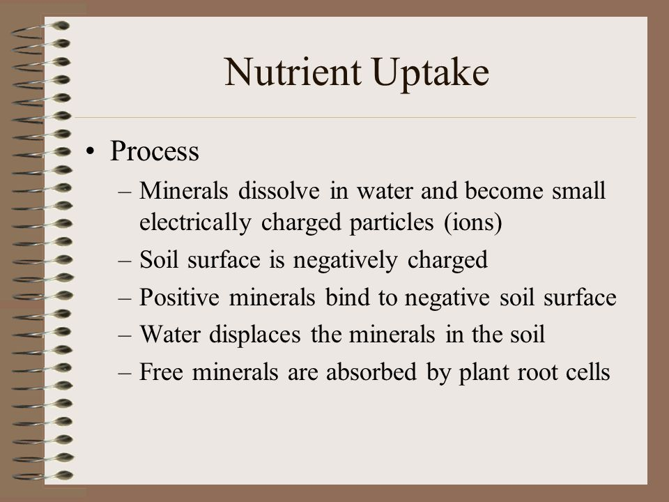 Nutrient Uptake Process –Minerals dissolve in water and become small electrically charged particles (ions) –Soil surface is negatively charged –Positi