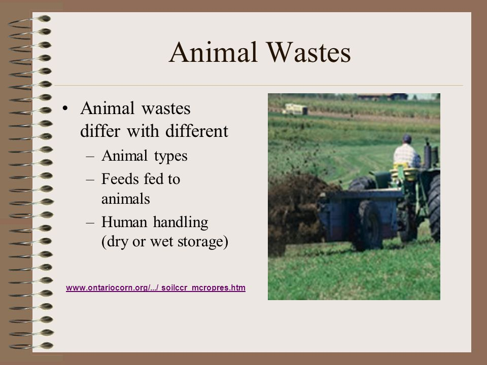 Animal Wastes Animal wastes differ with different –Animal types –Feeds fed to animals –Human handling (dry or wet storage) www.ontariocorn.org/.../ so