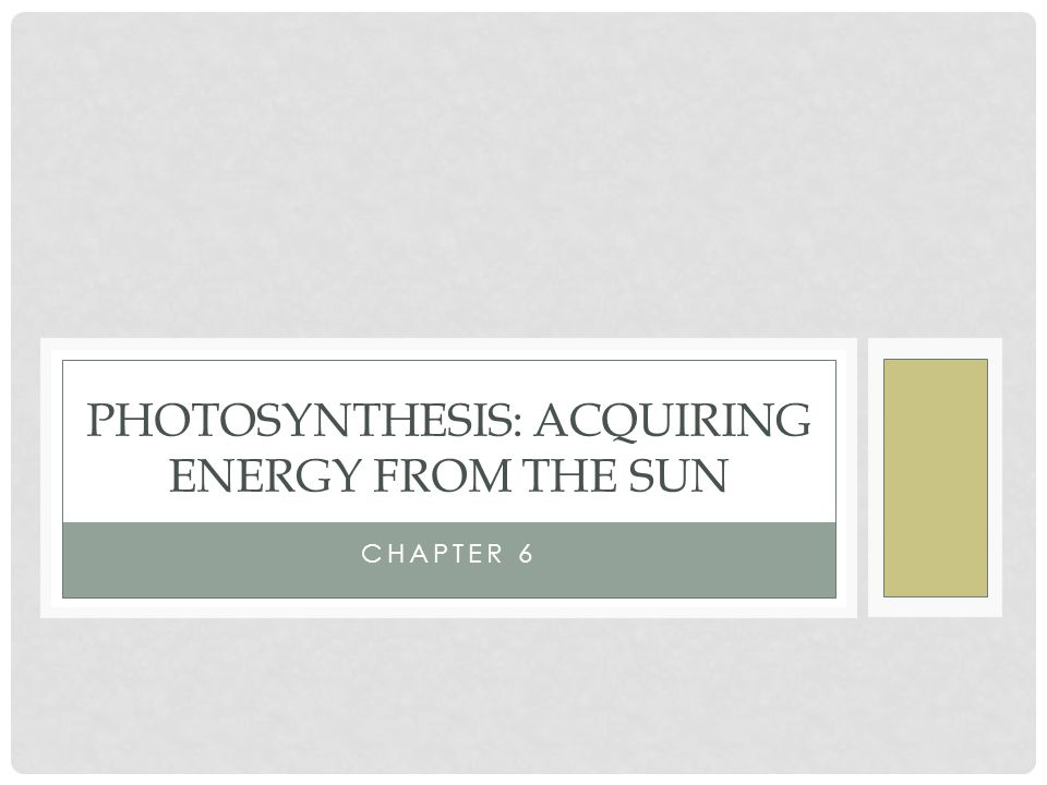 CHAPTER 6 PHOTOSYNTHESIS: ACQUIRING ENERGY FROM THE SUN