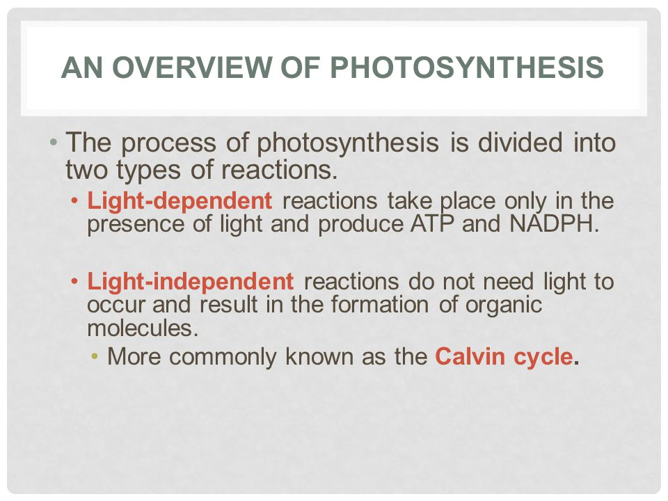 AN OVERVIEW OF PHOTOSYNTHESIS The process of photosynthesis is divided into two types of reactions.